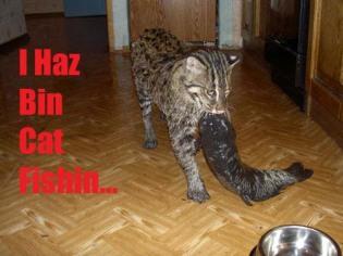 bigcat_2.jpg